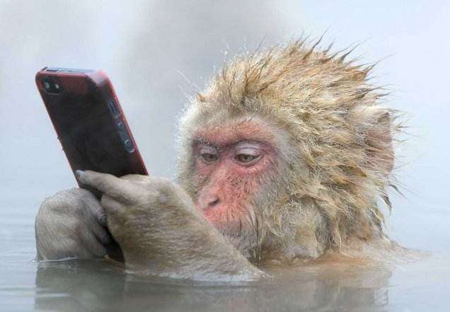 Monkey with phone